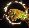Цирки в Жуковке